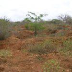 2006-10_Umba Valley (24)