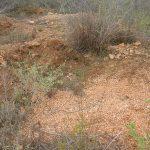 2006-10_Umba Valley (25)