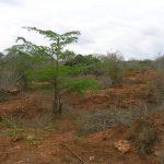 2006-10_Umba Valley (26)