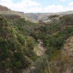 2009-04_Naivasha-Hells-Gate-23.jpg