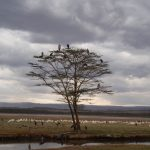2009-04_Naivasha-Hells-Gate-39.jpg