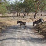 2009-04_Naivasha-Hells-Gate-4.jpg