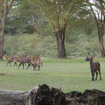 2009-04_Naivasha-Hells-Gate-8.jpg