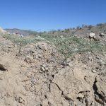 2014-06_Dolan-Springs_Gold-Mine-3.jpg